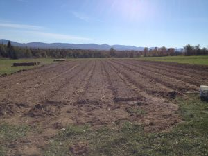 Plantation et buttes - ail 2018